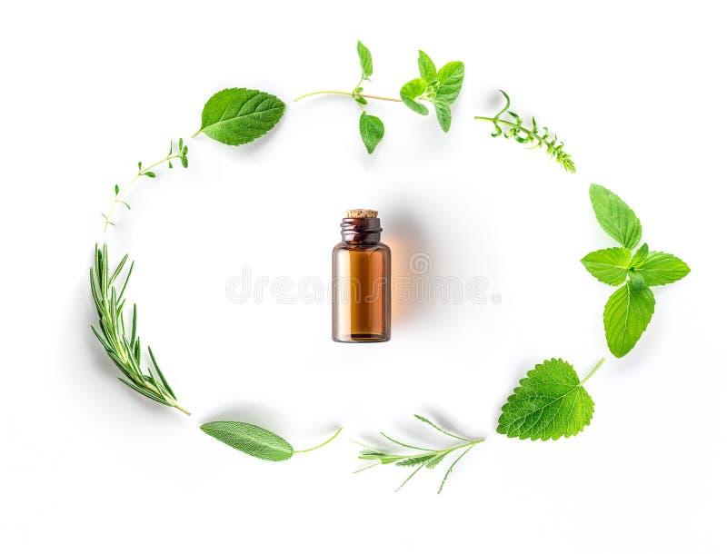 Fles etherische olie met verse kruidensalie, oregan rozemarijn, stock afbeelding