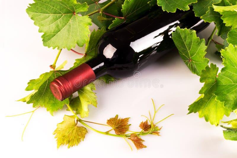 Fles rode wijn met groene wijnstokbladeren royalty-vrije stock foto