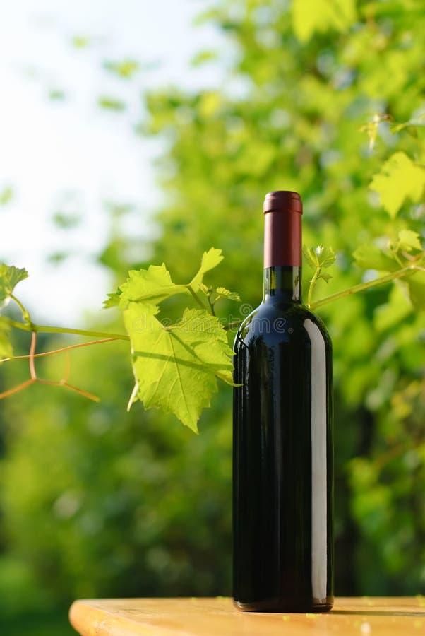 Fles rode wijn in wijngaard stock afbeeldingen