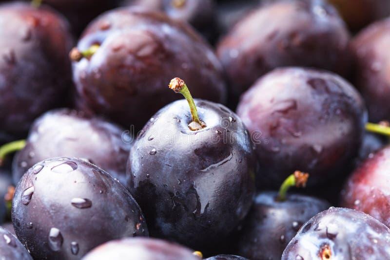 Fleshy plums stock image