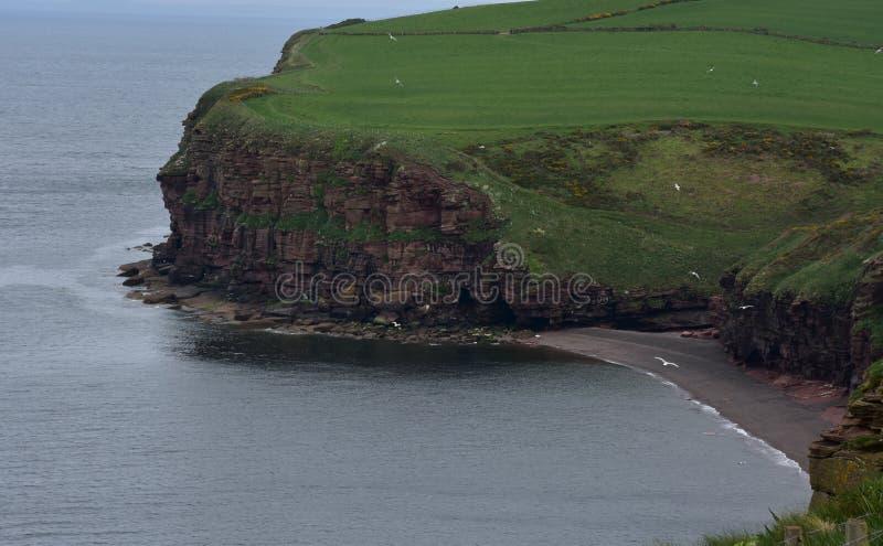 Fleswick zatoka i Irlandzki morze z Piaskowcowymi Dennymi falezami obrazy stock