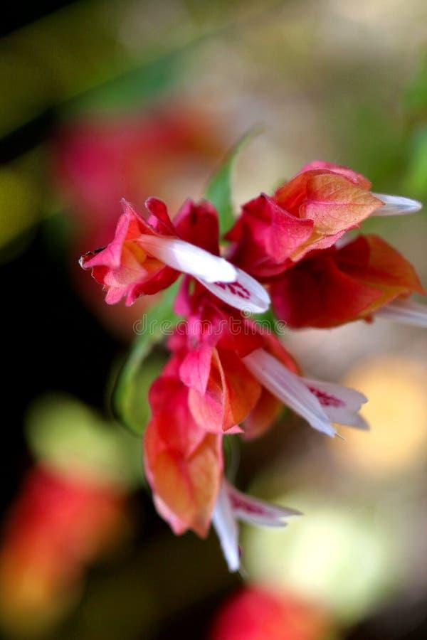 Fleur à gainesville image libre de droits