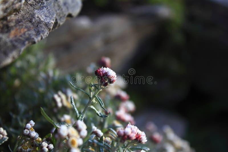 Fleur à hauteur d'altitude de macro photographie photos libres de droits