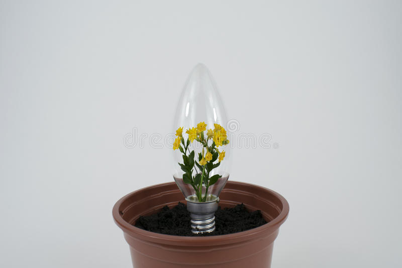 Fleur à l'intérieur d'ampoule images libres de droits