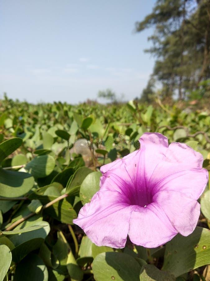 Fleur à la plage photo libre de droits