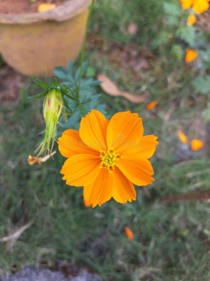 Fleur à sa beauté images stock