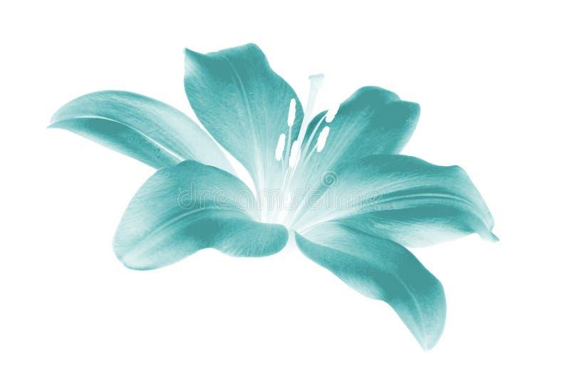 fleur électrique photographie stock