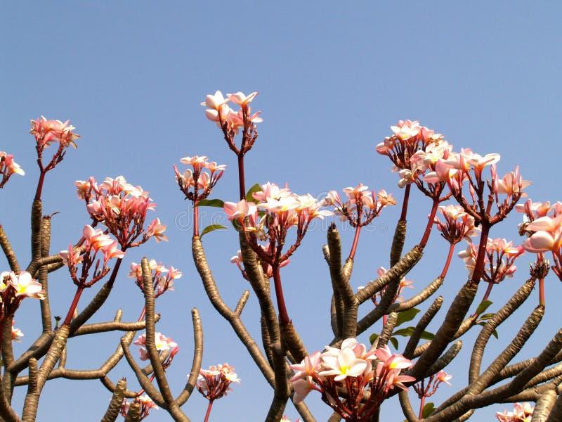 Fleur 09 photos stock