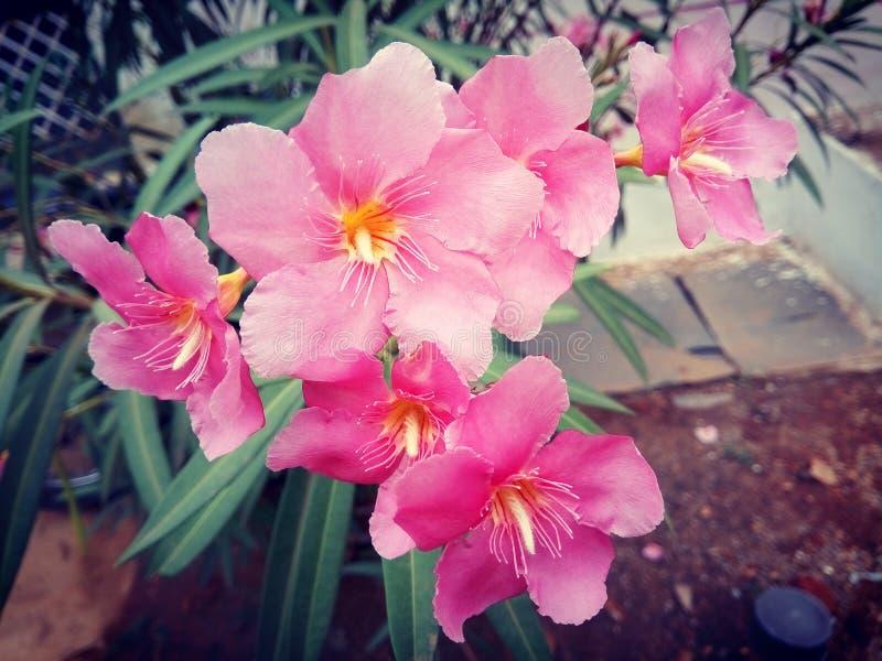 Fleur photo stock