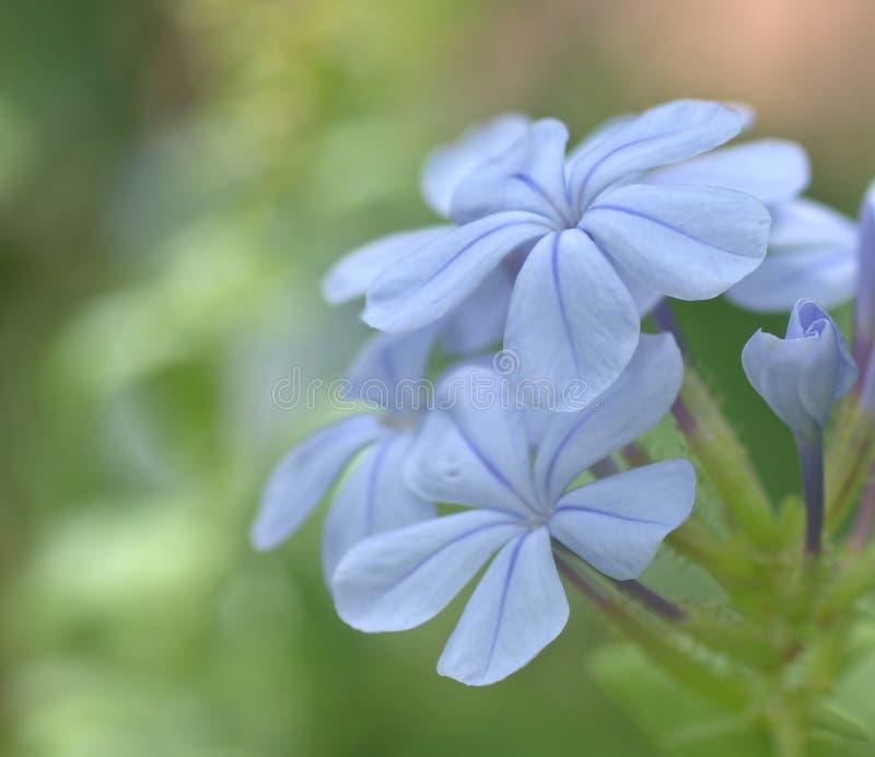 Fleur photos libres de droits