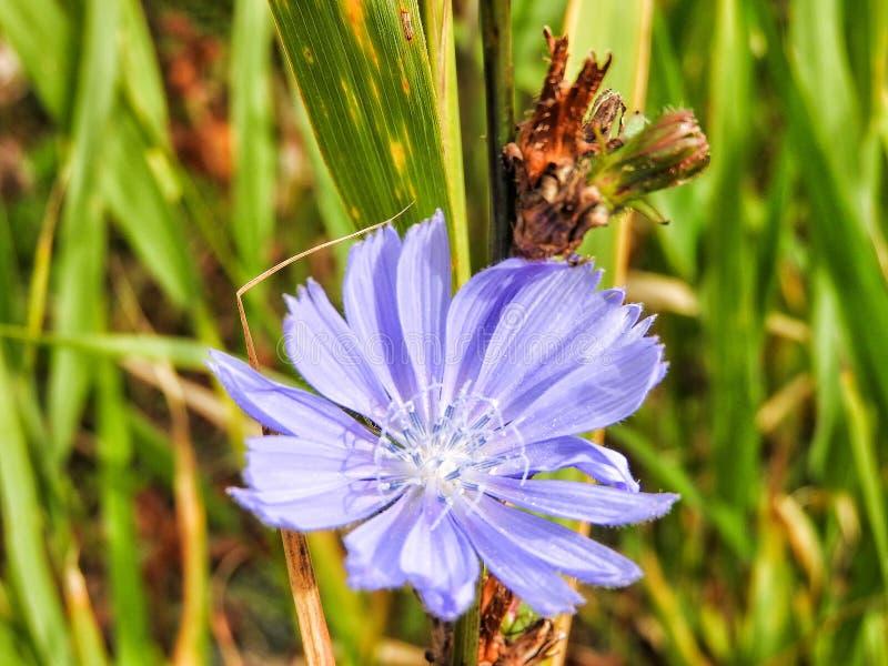 Fleur 230 image libre de droits