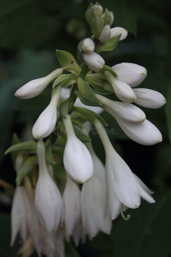 Fleur photographie stock