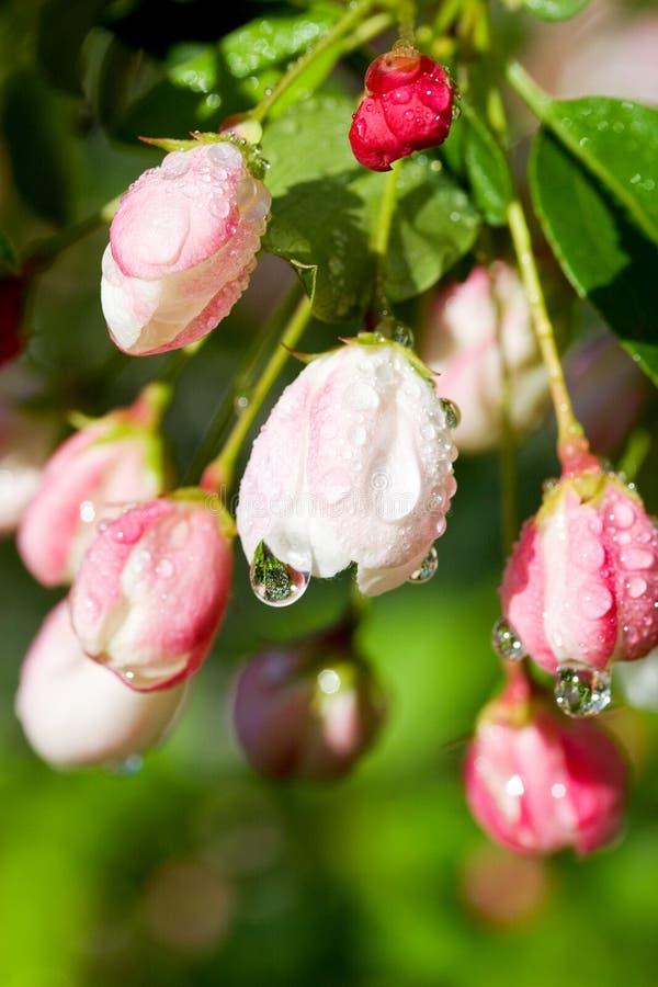 Download Fleur image stock. Image du humide, lames, saison, pureté - 741471