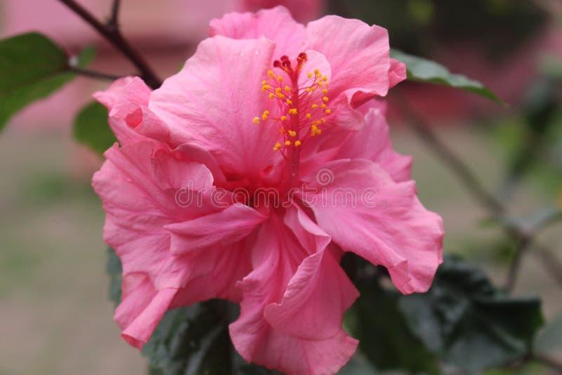Download Fleur photo stock. Image du beau, fine, beauté, fleur - 87705686