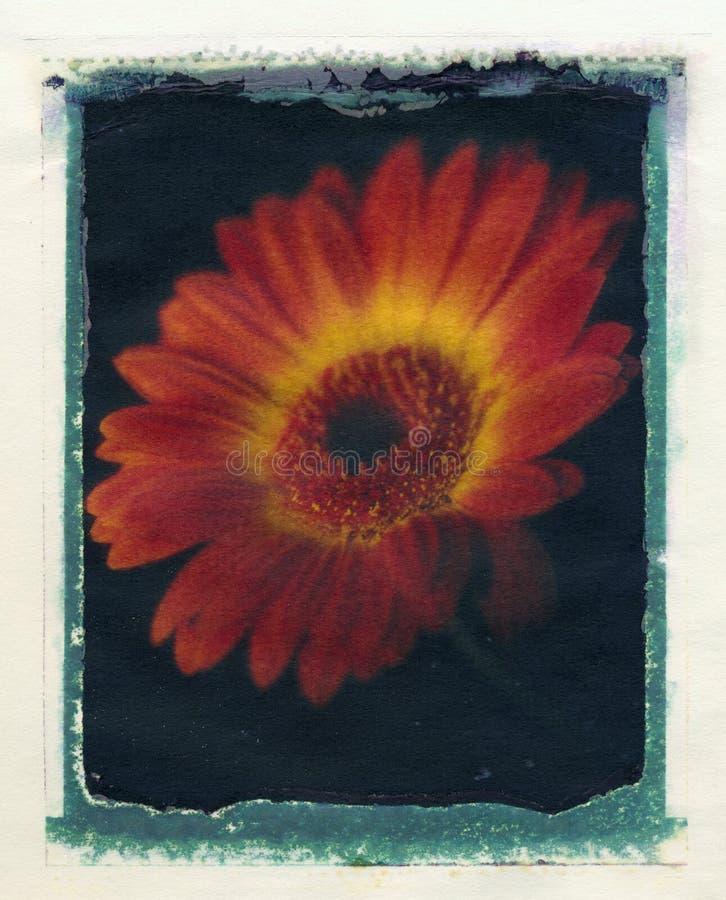 Fleur abstraite de gerbera illustration de vecteur
