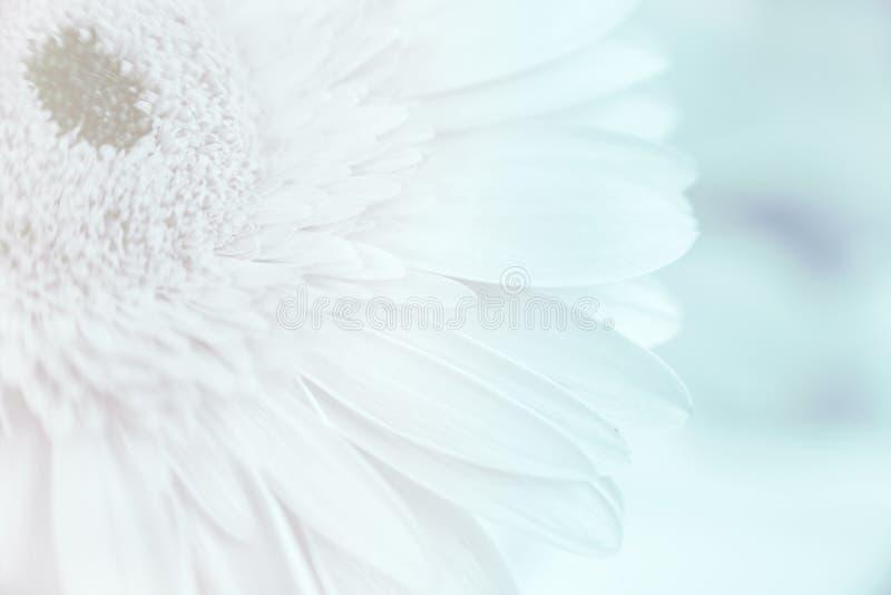 Fleur abstraite de pétales photographie stock libre de droits