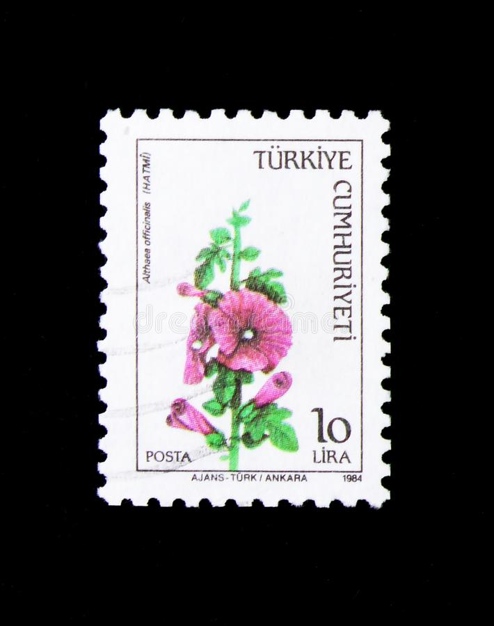Fleur Althaea Officinalis, serie de guimauve de fleurs sauvages, vers 1984 photo stock