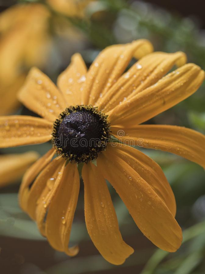 Fleur après la pluie chaude photographie stock libre de droits