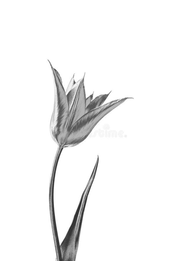 Fleur argentée illustration stock