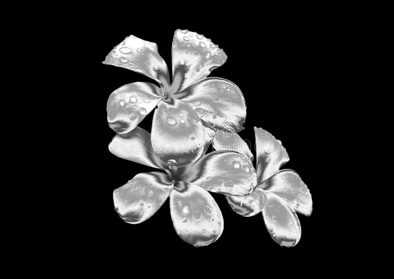 Fleur argentée photos stock