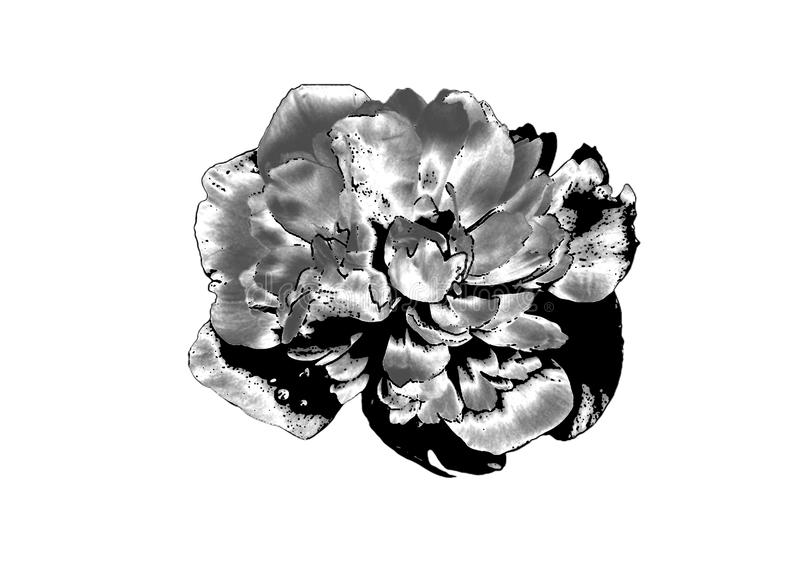Fleur argentée illustration de vecteur