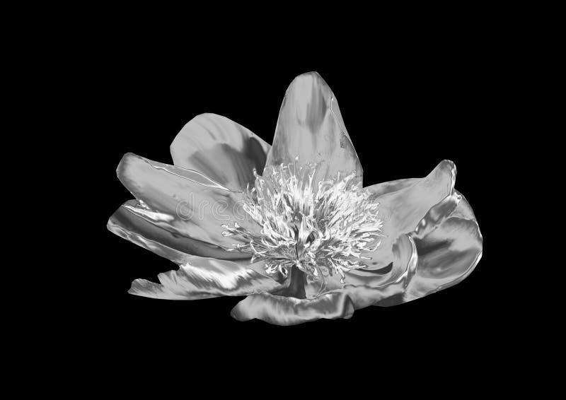 Fleur argentée photo stock