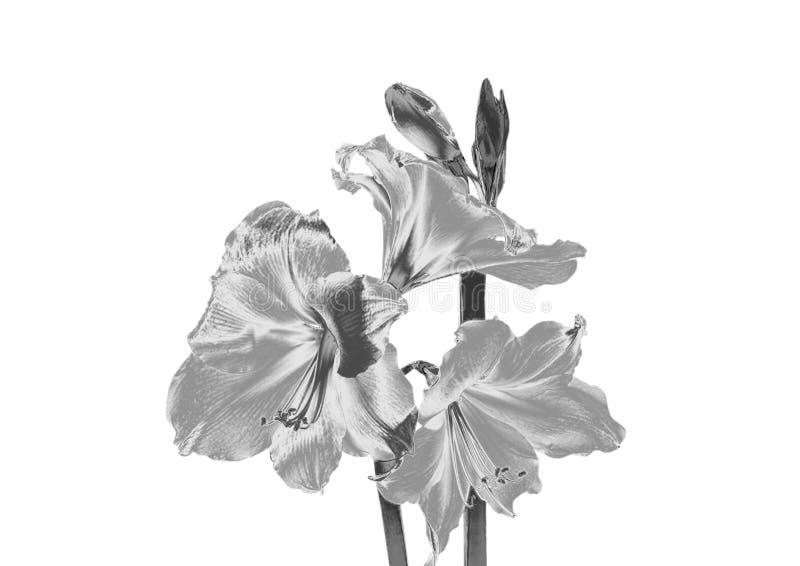 Fleur argentée photos libres de droits