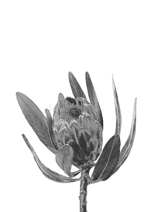 Fleur argentée image stock