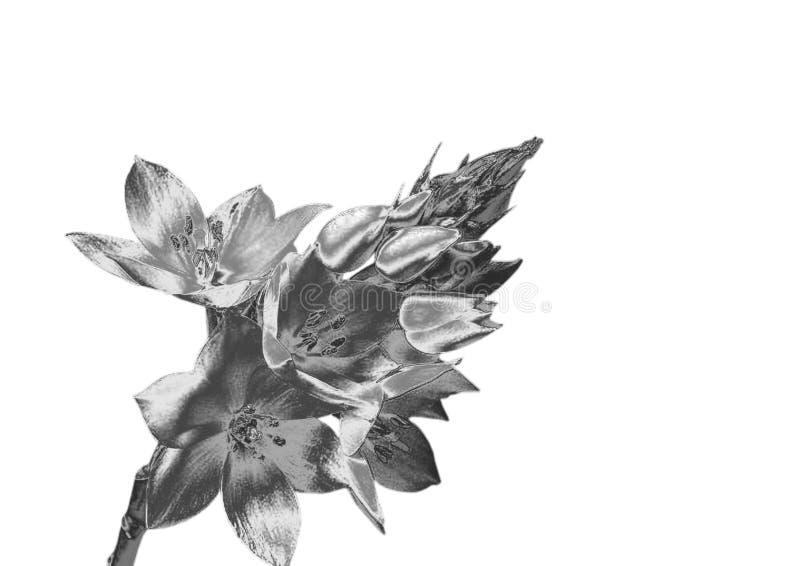 Fleur argentée images stock