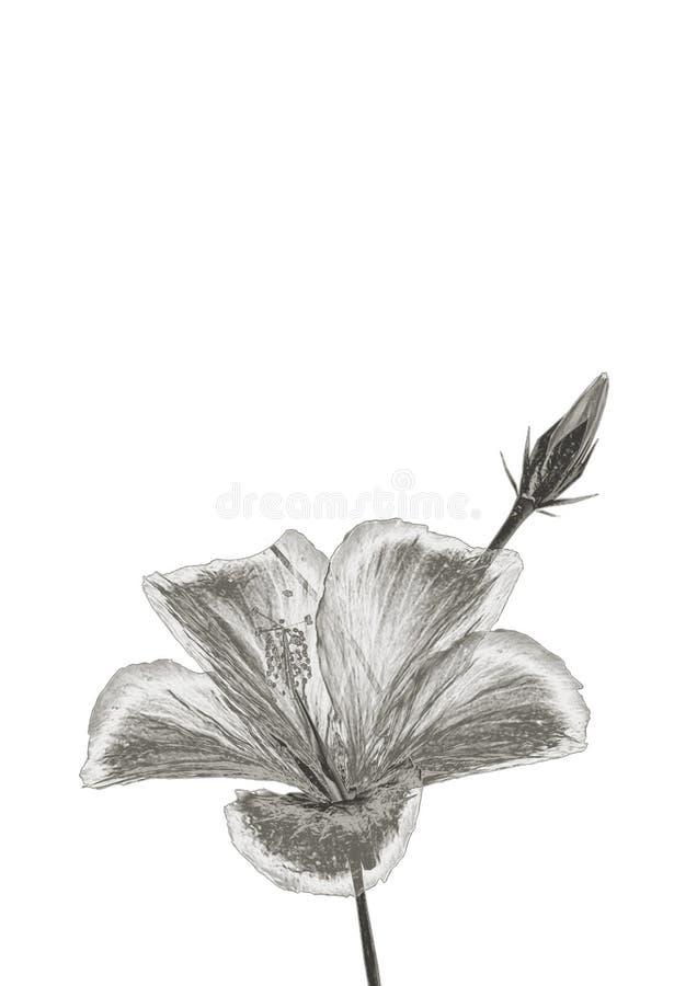 Fleur argentée illustration libre de droits