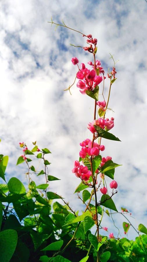 Fleur au ciel photos libres de droits