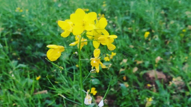Fleur au coeur photographie stock