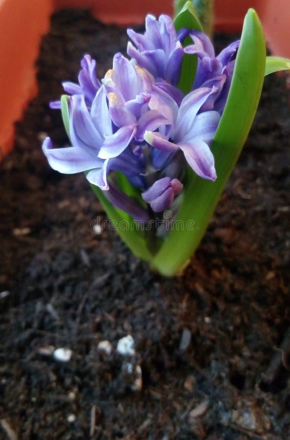 Fleur au matin photo libre de droits
