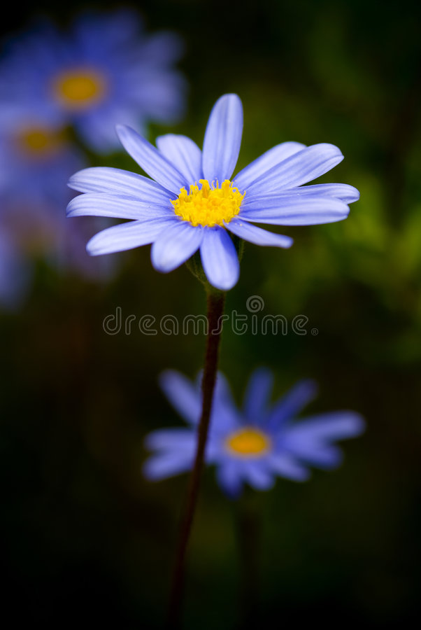 Fleur au plan rapproché photographie stock libre de droits
