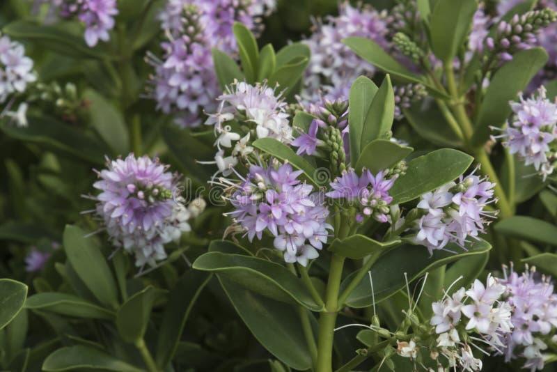 Download Fleur au printemps photo stock. Image du centrale, nature - 77151652