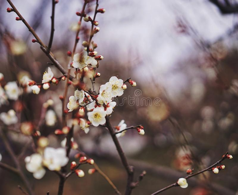 Fleur au printemps images libres de droits