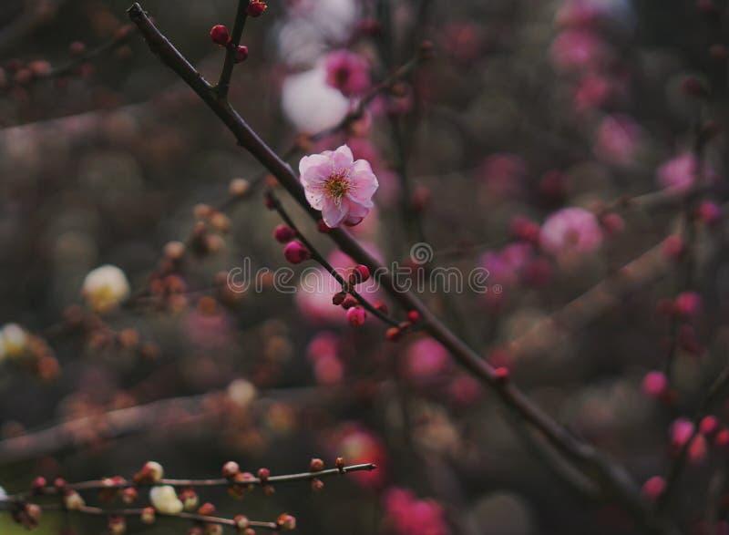 Fleur au printemps photos libres de droits