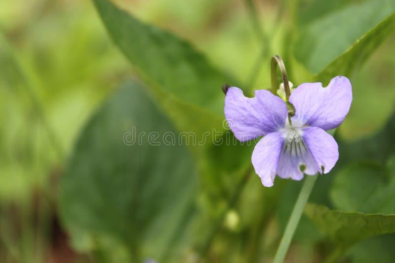 Fleur avec du charme de ressort photos libres de droits