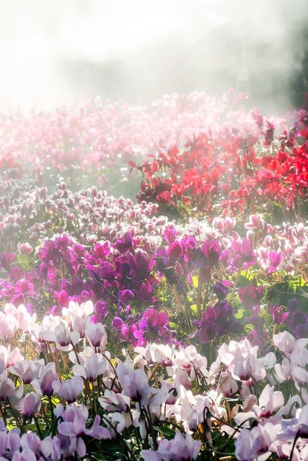 Fleur avec le brouillard photo libre de droits