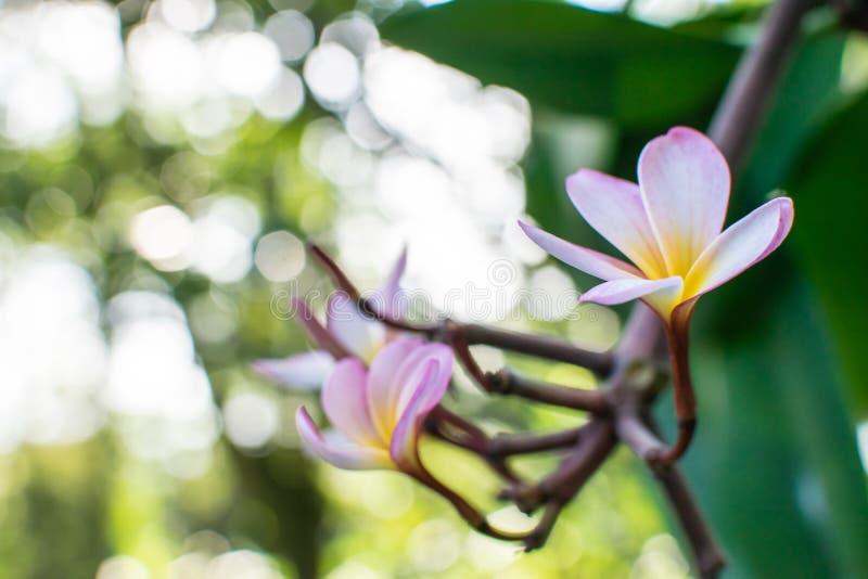 Fleur avec le fond trouble image stock