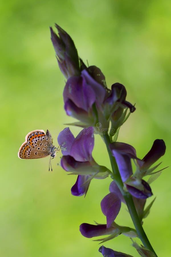 Fleur avec le papillon image stock