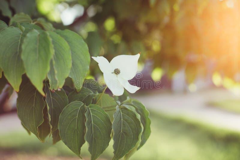 Fleur avec le rayon de soleil photo stock