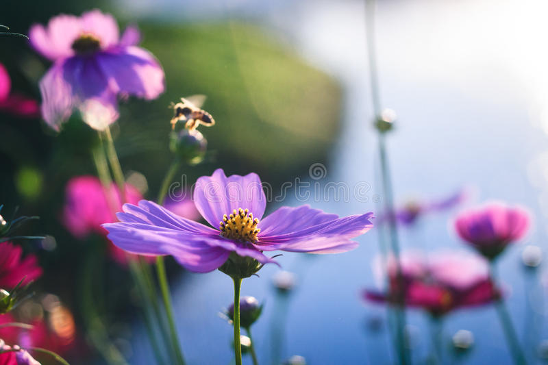 Fleur avec le rimlight photo stock