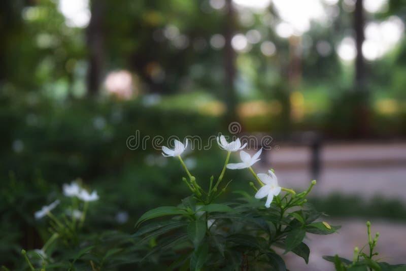 Fleur blanche photographie stock libre de droits