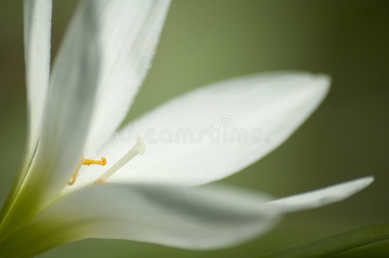 Fleur blanche 2 photo stock