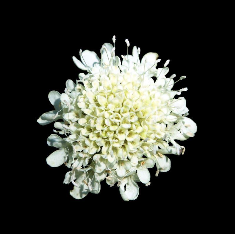 Fleur blanche photo stock