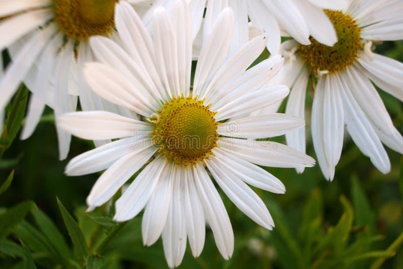 Fleur blanche 7 images libres de droits