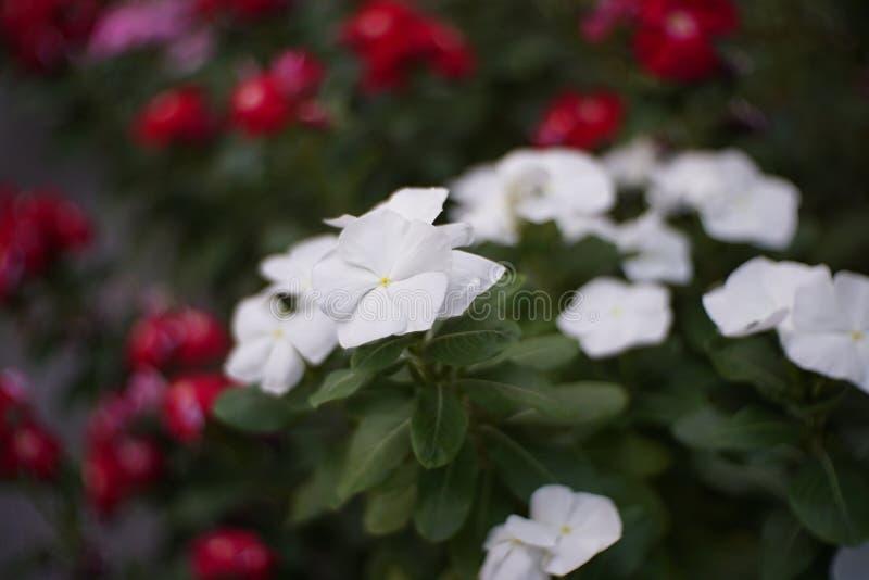 Fleur blanche avec le fond de tache floue photographie stock libre de droits