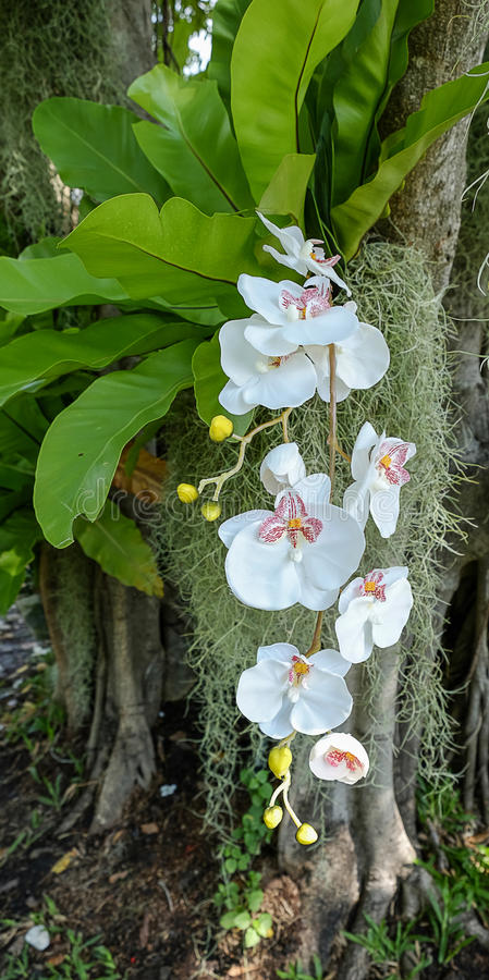 Fleur blanche d'orchidée photographie stock