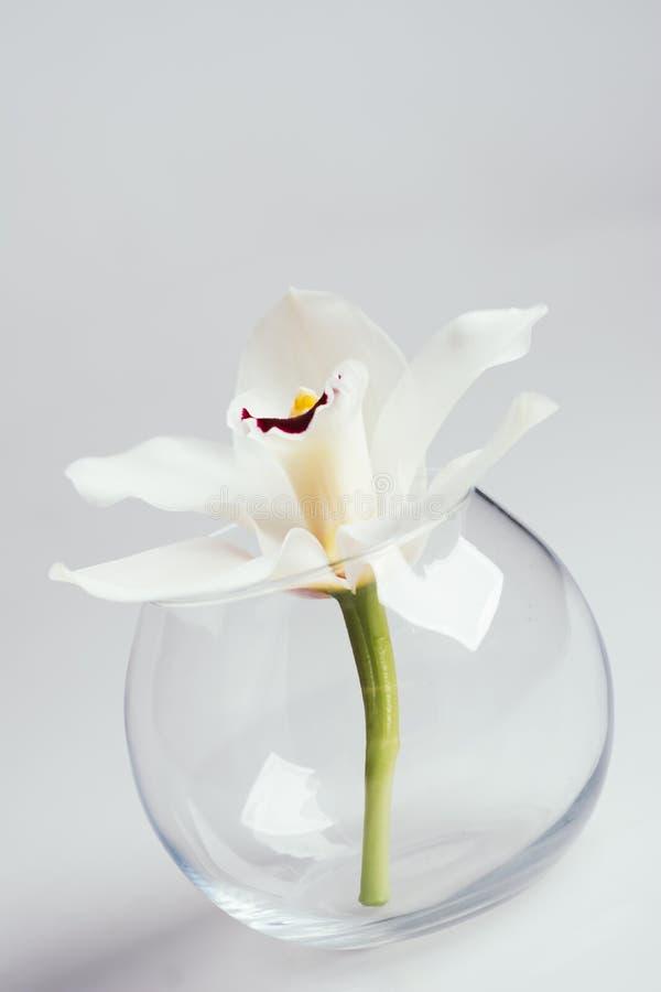 Fleur blanche d'orchidée dans un vase transparent images stock